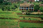 Farm House and Rice Fields Madagascar