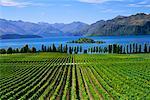 Rippon Vineyard and Lake Wanaka South Island, New Zealand