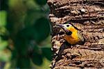 Campo Flicker, Pantanal, Brazil