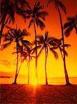 Palm Trees at Sunset, North Shore, Oahu, Hawaii, USA