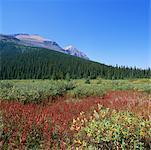 Champs, forêts et montagnes Banff National Park, Alberta, Canada