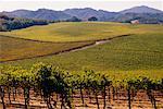 Vignoble, Californie, USA