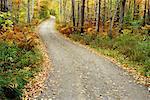 Route de campagne en automne, Vermont, New England, USA