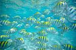 Banc de poissons, Bahamas, Caraïbes