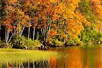 Lewey Lake in Autumn, Adirondack Park, New York State, USA