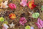 Autumn Leaves, Pine Cones and Pine Needles
