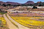 Country Road, Kamiesberg Plateau, Namaqualand, South Africa