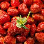 Gros plan de fraises