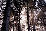 Sonnenstrahlen durch Wald, Oregon, USA