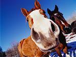 Portrait of Horses