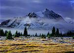 Vallée Tonquin, Parc National Jasper, Alberta, Canada