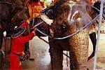Man Washing Elephant, Ayutthaya, Thailand