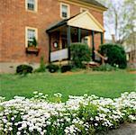 Lit de fleurs dans le jardin de la maison