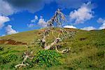 Barren Tree, Easter Island, Chile