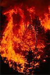 Forest Fire, Oakland, California, USA