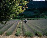 Alpes de Haute, Provence, France
