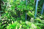 Foliage, Los Angeles, California, USA