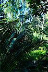 Palmfarnen, Los Angeles County Arboretum und Botanischer Garten, Arcadia, Kalifornien, USA