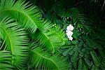 Palmfarne, Orchidee und Calathea, Los Angeles County Arboretum und Botanischer Garten, Arcadia, Kalifornien, USa