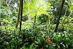 Clivia und Baumfarn, Huntington Botanical Gardens, Pasadena, Kalifornien, USA
