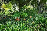 Huntington Botanical Gardens, Pasadena, Kalifornien, USA