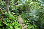 Palmfarne und Path, Los Angeles County Arboretum und Botanischer Garten, Arcadia, Kalifornien, USA