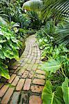 Vegetation und Pfad, Los Angeles County Arboretum und Botanischer Garten, Arcadia, Kalifornien, USA
