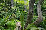 Vegetation, Los Angeles County Arboretum und Botanischer Garten, Arcadia, Kalifornien, USA