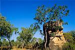 Jaune eau Billabong, Parc National de Kakadu, territoire du Nord, Australie