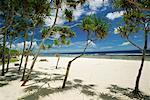 Palm Trees, Tamanu Beach Club, Efate, Vanuatu