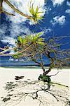 Trees, Tamanu Beach Club, Efate, Vanuatu