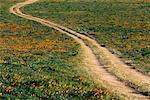 Chemin de terre et champ de pavot de Californie, Lancaster, California, USA
