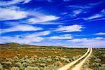 Chemins de roulement et champ de coquelicots de Californie, Lancaster, California, USA