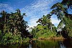 Amazonas-Becken, Ecuador