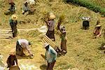 Ceux qui travaillent dans le domaine, Bali, Indonésie