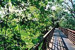 Pont en bois, Napa Valley, Californie, USA