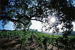 Weingut, Napa Valley, Kalifornien, USA