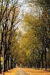 Rue à l'automne, Salzbourg, Autriche