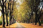Avenue à l'automne, Salzbourg, Autriche