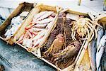 Fruits de mer pour la vente, Oia, Santorini, Grèce