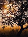 Mesquite Tree, Welder Wildlife Refuge, Texas, USA
