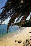 Lady's Bay, Sydney, New South Wales, Australia