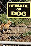 Chihuahua gardiennage Yard