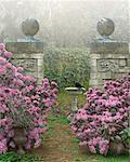 Walled Garden and Birdbath