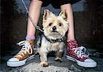 Portrait of Dog on Leash