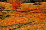 Fall Meadow, Shamper's Bluff, New Brunswick, Canada