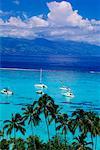 Sailboats, Moorea, French Polynesia