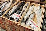 Frozen Fish, Tsukiji Fish Market, Tokyo, Japan