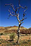 Nackten Sie Baum in Palm Valley, Finke Gorge-Nationalpark, Northern Territory, Australien