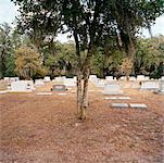 Cimetière de Bonaventure, Savannah, Georgia, USA